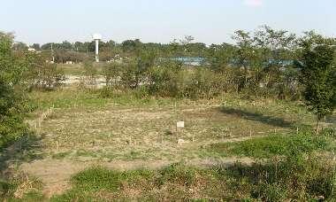 カワラノギク保護区