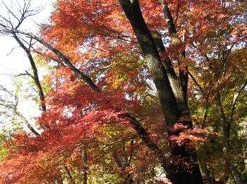 永山公園 4