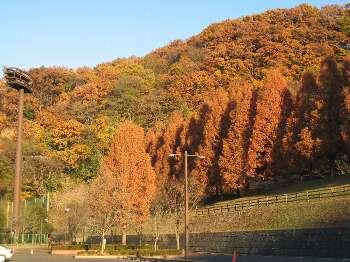 紅葉 (飯能市阿須)