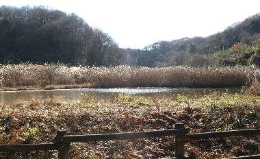 水鳥の池(さいたま緑の森)