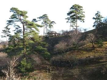 梅の公園A (冬)