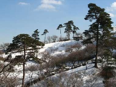 梅の公園 1(雪)