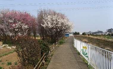 霞川の遊歩道