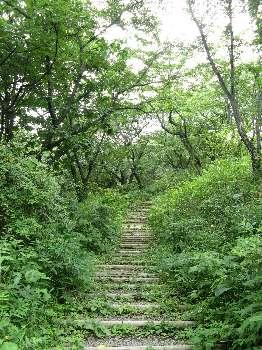 ハイキングコース(小峰公園)
