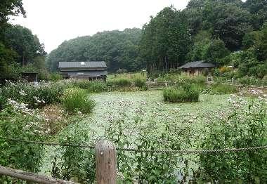 しょうぶ公園内の池(吹上)