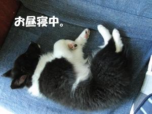 お昼寝くまちゃん