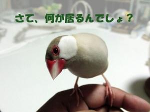 何がいるでしょ〜?