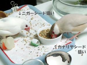 夢中になって食べてます!