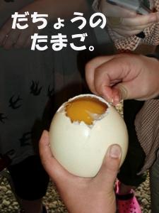 だちょうの卵開きました!
