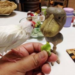 ハシビロさんを眺めながらそらまめを食べるまめさん