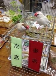 ピイチク会〜春の小鳥まつり