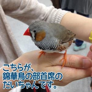 だいちゃん入賞おめでとうございます〜!