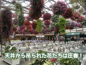 色々な花の展示も状態が良くて素晴らしいです。
