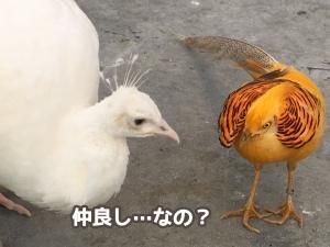 可愛い鳥さんとふれ合えます♪