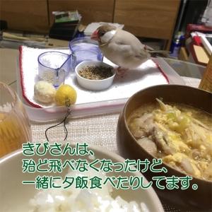 きびさんと一緒に夕飯