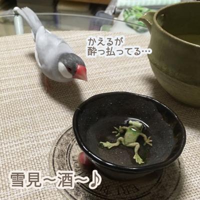 文鳥に日本酒は飲ませちゃいけませんよ。
