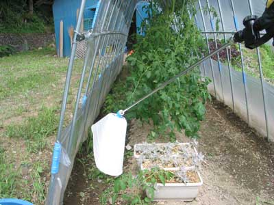 野菜への散布試験をするトマト周辺の状況です