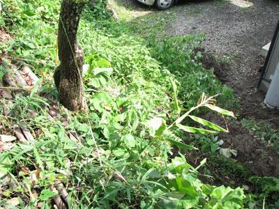 台風9号の傷跡:地滑りで隣家へ崩れ落ちた土砂2