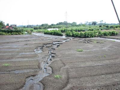 畑の中を横切る雨水は畑の土も流してしまいます