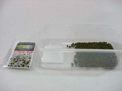 スプラウトマットを入れて、緑豆栽培を行います