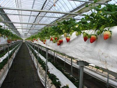上段で収穫、下段で育苗中