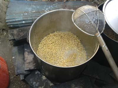 自家製味噌を製造する為に緑色系のダイズを煮ました。