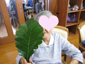 blogかしわ餅1.JPG