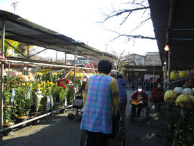 菊花大会2.JPG