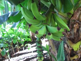 熱帯植物園1.JPG