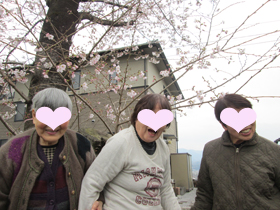 かっぱ桜3.JPG