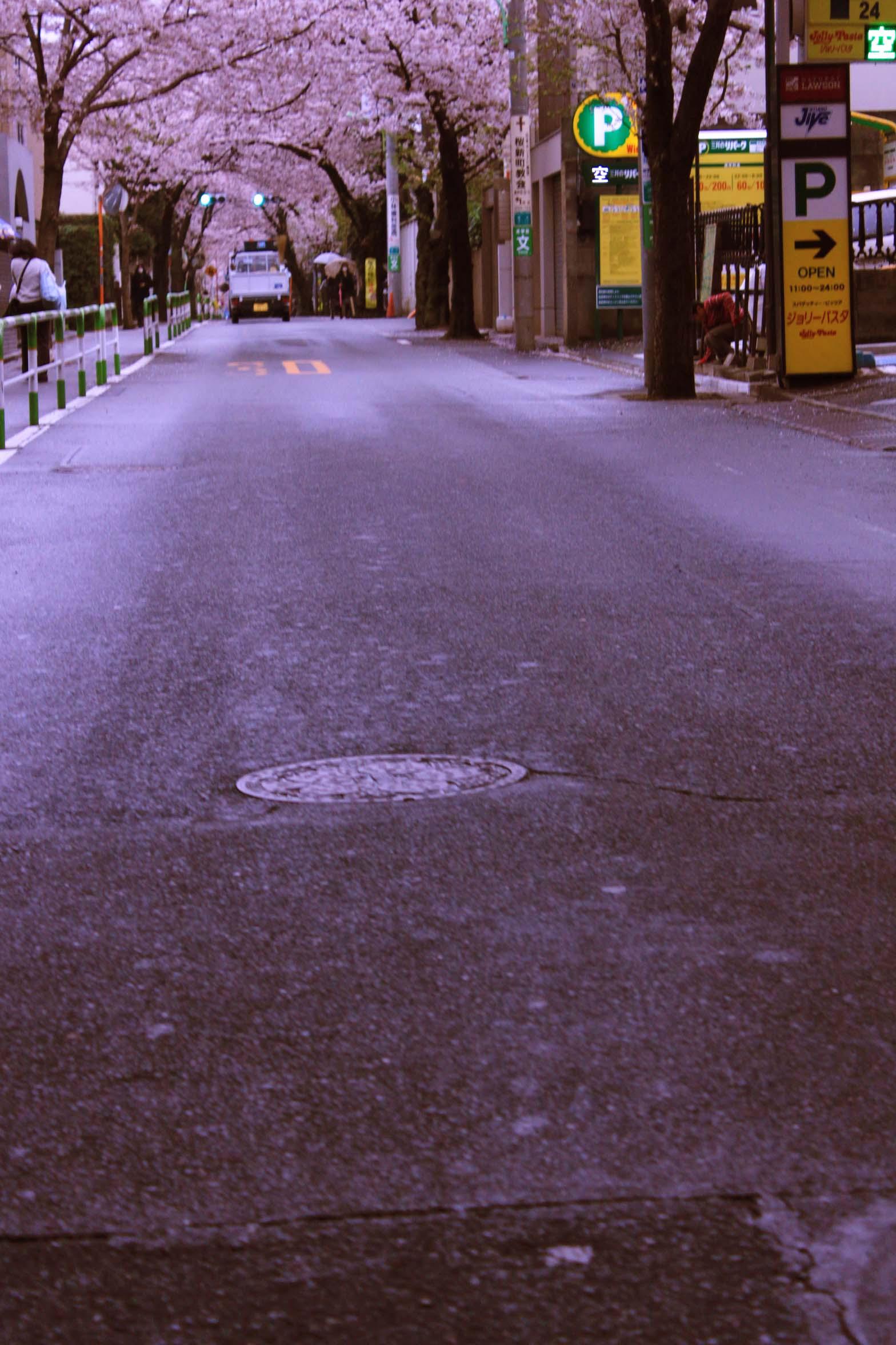 桜のトンネルに向かって