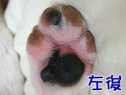 肉球は黒で指はピンク。