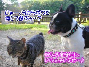 猫パンチはやめてな〜。