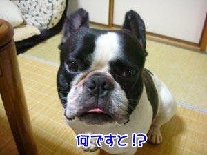 また「犬はアカン」か!!