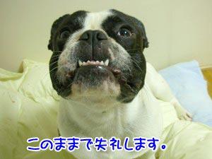 必死なときは歯が出ます