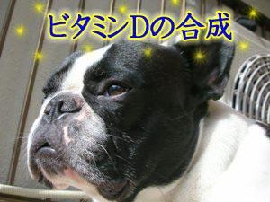 ビタミンD合成中☆