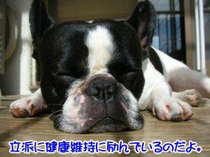 寝てるだけぢゃ〜ないんだYO!