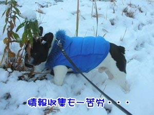 情報が雪で消されとるっ!