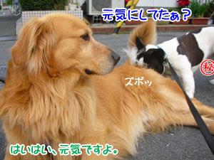 思う存分嗅がせてぇ(´∀`*)