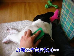 ふわぁ〜〜眠たくなってきたぁ〜