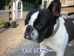 Σ(・∀・|||)ゲッ!!