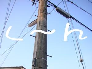 ただの電柱で〜す♪