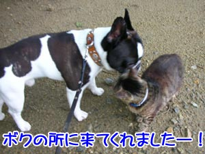 ☆-ヽ(*´∀`)八(´∀`*)ノイエーイ