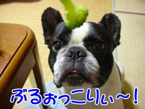 (σ・∀・)σゲッツ!!