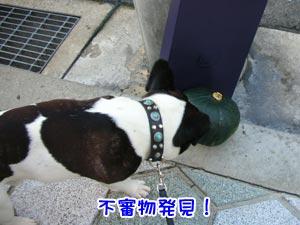 なんぢゃこりゃー!?