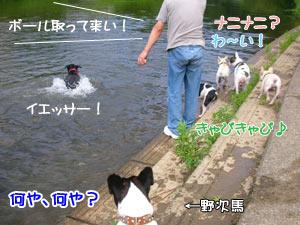 泳いでますやんー!