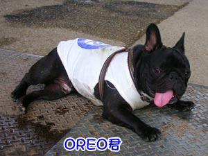OREO君