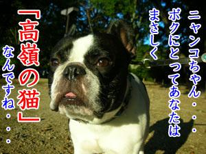 (´・ω・`)ショボーン