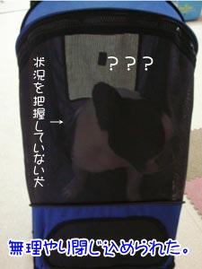 なんぢゃ!?