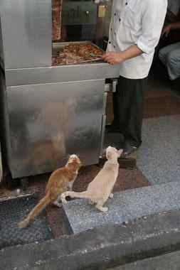 ハーン・ハリーリの猫1